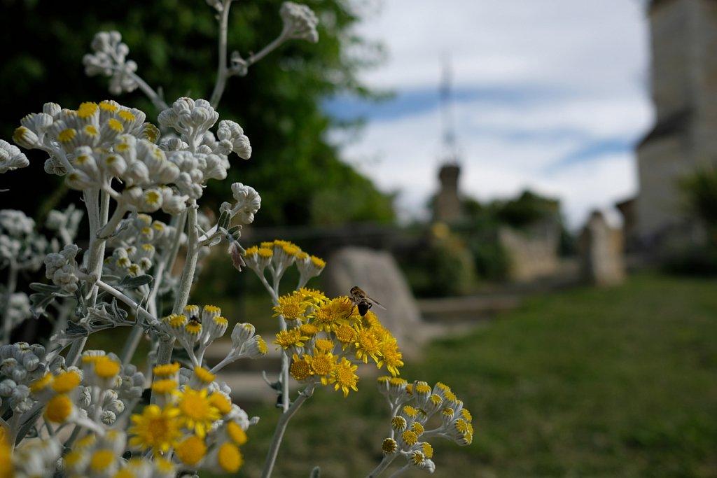 Patrick-S-abeille1.JPG